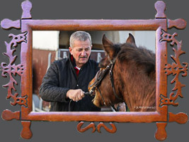 Навчання: Методи навчання І роботи з молодим конем гуцульської породи