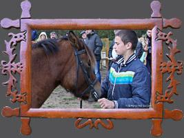 Навчання: Походження, типи, напрямки селекції і використання коней гуцульської породиі. I тур 21-23.10.2014r