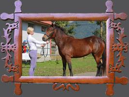 ХІ Свято гуцульського коня 2016 23-24 вересня 2016 року