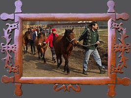 Навчання: Навчання: Технологія вирощування і тренінгу молодих гуцульських коней та підготовка їх до випробувань, 09-15 березня 2015 року