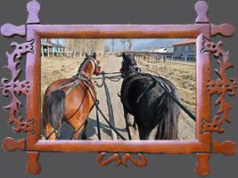 Навчання: Навчання: Технологія вирощування і тренінгу молодих гуцульських коней та підготовка їх до випробувань, 16-22 березня 2015 року